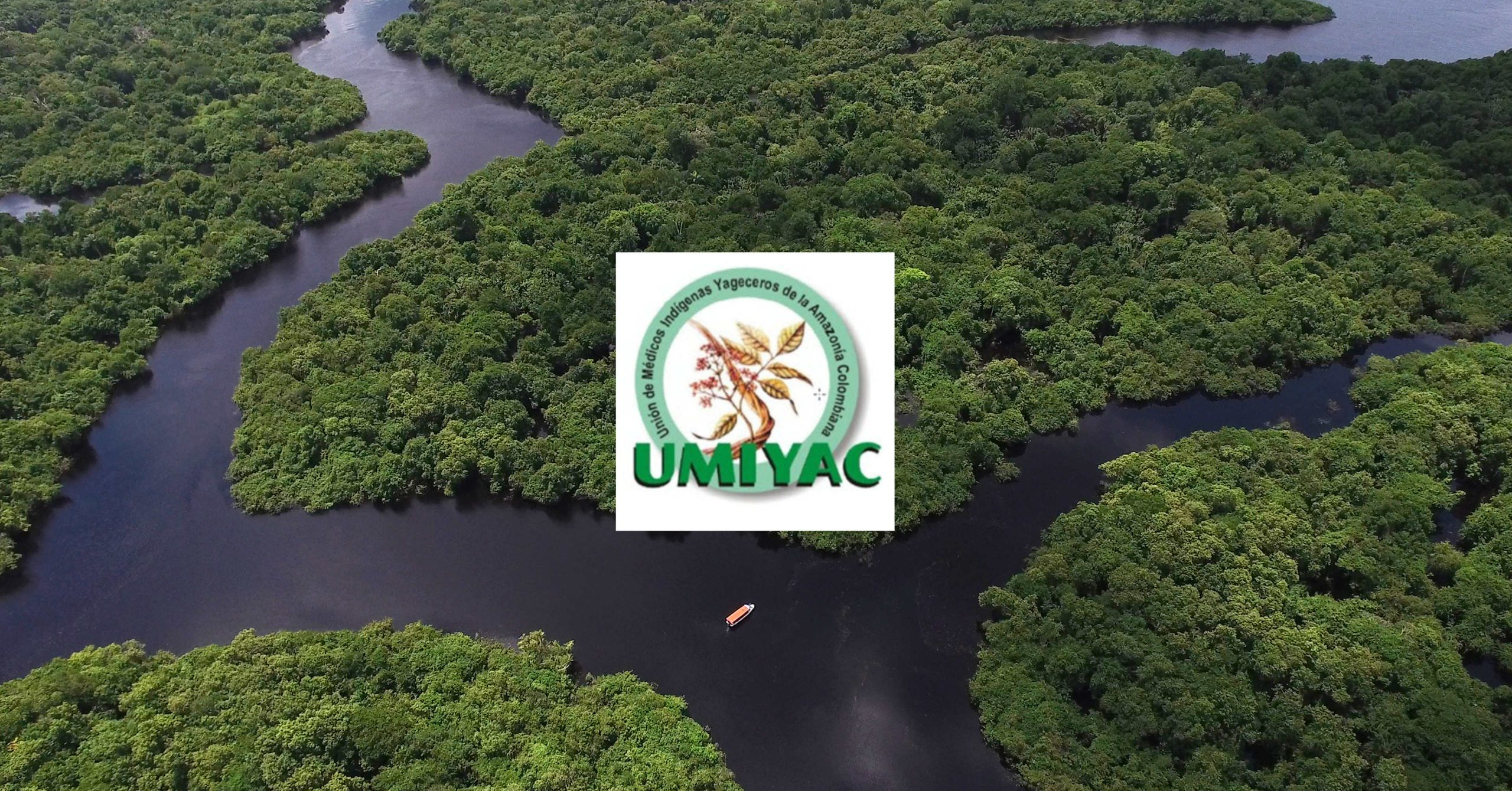 1999 – UMIYAC, Colombian Union of Yage Healers Founded