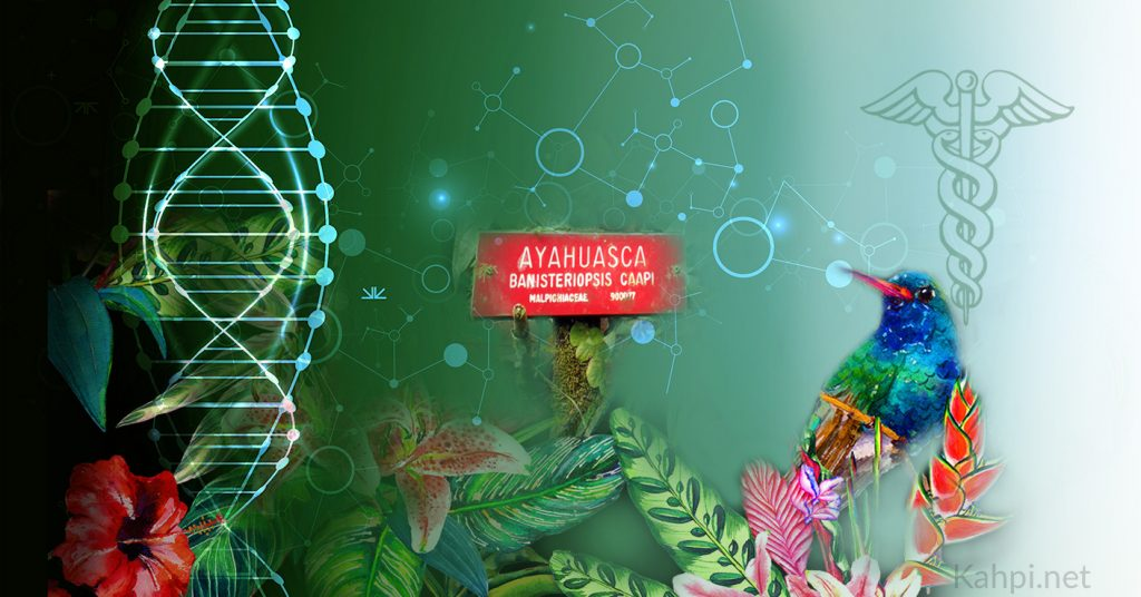 ayahuasca chemical structure molecules