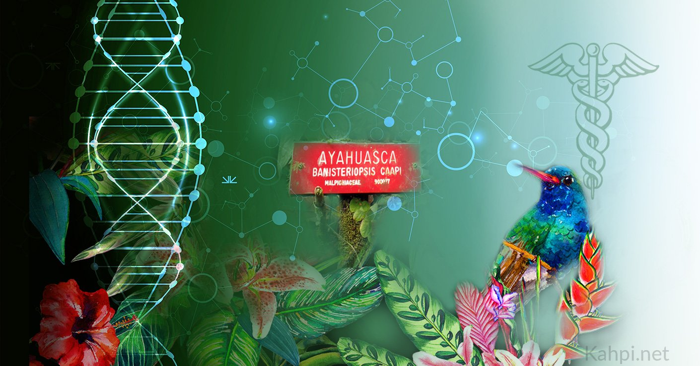 1957 – The Discovery of the Ayahuasca Chemical Structure in Medicine