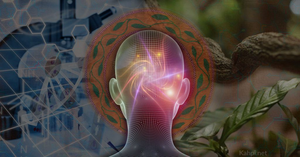 dmt and ayahuasca science